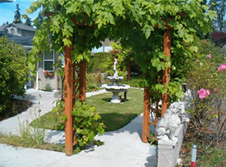 Arched courtyard trellis with grape vines.